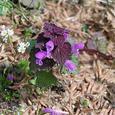 Kvetina_f
